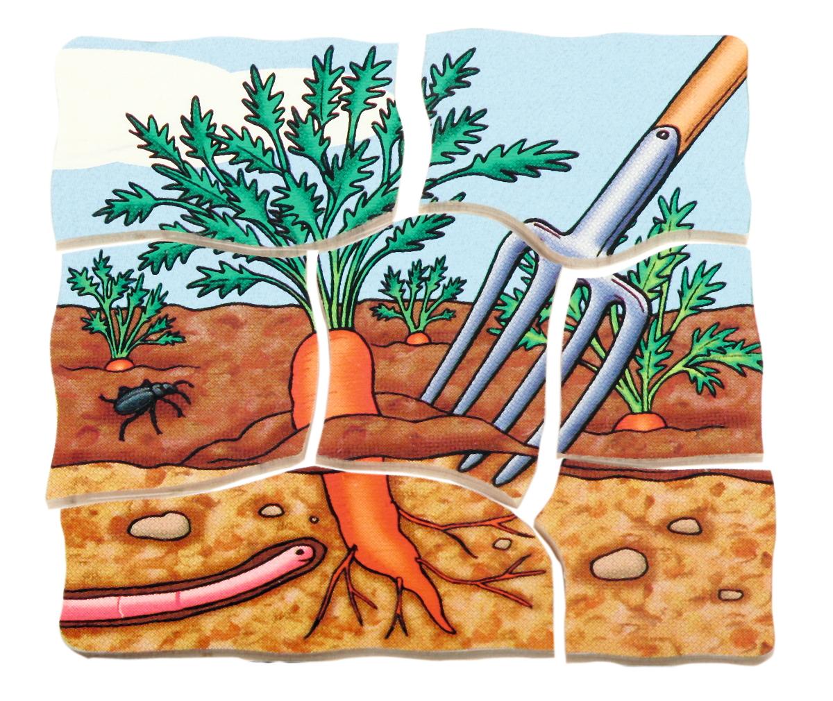 белая морковка весной растет